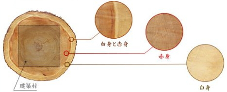 伊勢神宮 杉の構造説明