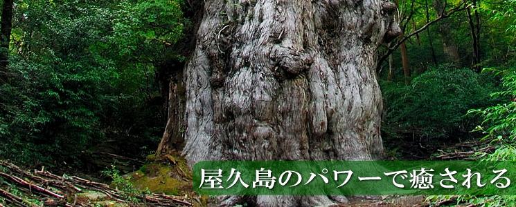 屋久島のパワー